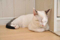 強い日中の眠気で睡眠発作から居眠りをしてしまう